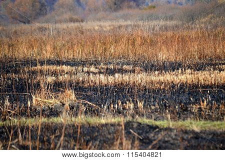 Stems Of Dry Grass On The Scorched Field