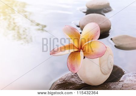 Beautiful Flower Plumeria Or Frangipani On Water And Pebble Rock For Spa Meditation Mood