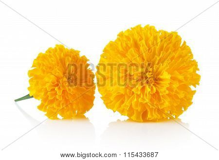 Marigold Flower On White Background