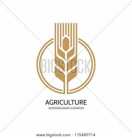 Ear of wheat - vector logo concept illustration. Cereal logo. Organic logo. Ecology logo. Bio logo.
