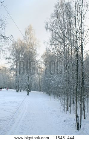 winter in russian forest