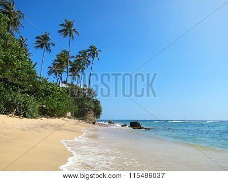Green palms at empty beach in Weligama bay, Sri Lanka
