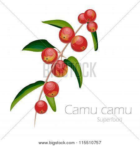 Illustration of camu camu.