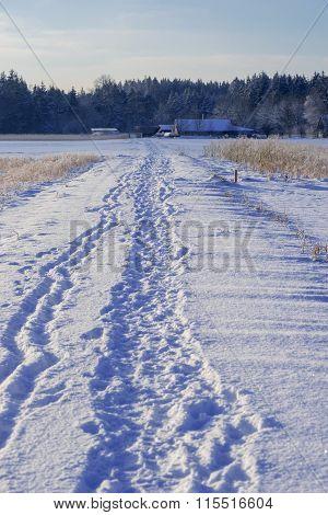 Foot Track In Wintry Landscape