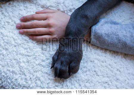 Closeup Of Dog Paw And Child's Hand