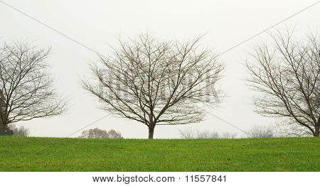 Kentucky Tree Line