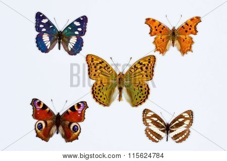 Collection Of Five Brush Footed Butterflies On White
