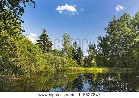 Beautiful Swamp Lake In The High Fens, Belgium