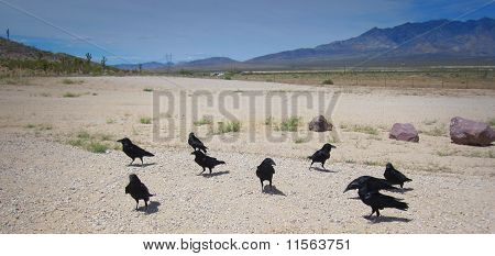 crows in desert