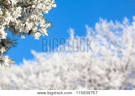 Twigs Full of Snow in Winter Wonderland