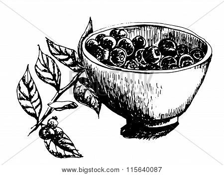 cup filled with fresh blueberries and a sprig of blueberries hand drawn vector illustration