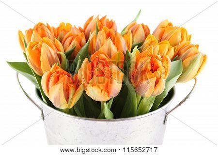 Lots of orange tulips