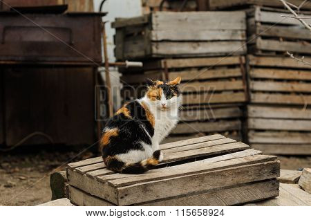 tricolored fluffy cat sitting on the street countryside poster