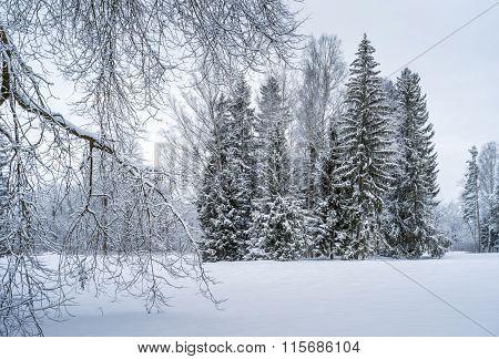 Winter Park With Fir Trees