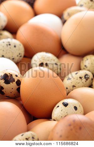 Fresh Eggs Background.