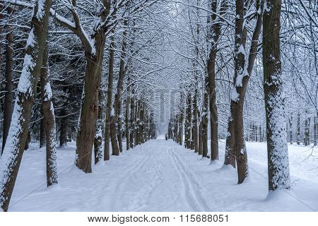 Alley In Winter Park