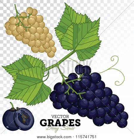 Grape Set, Vector.