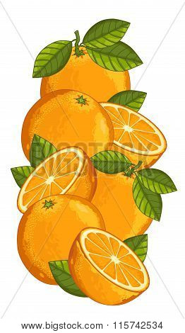 Orange isolated, Vector, composition.