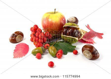 Rowan, An Acorn And A Chestnut, Apple And Autumn Leaves