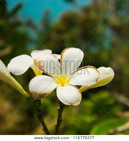Blooming Trees Tropical Verdure