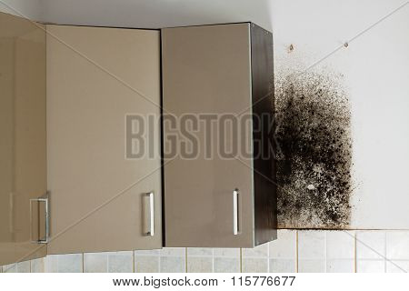 Mold problem and the mycelium (fungus).