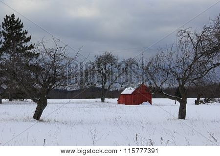 Apple orchard in winter. Port Oneida Rural Historic District, Sleeping Bear Dunes National Lakeshore poster