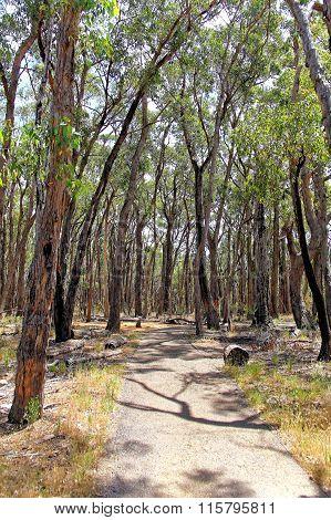 Pathway through Australian rainforest