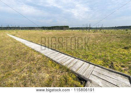 Wooden Board Walk Over The Obary Peat Bog  In Poland