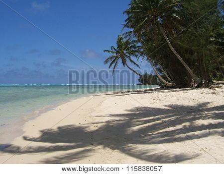 Palm tree shadows on a white sand beach