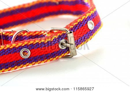 Picture of a Colorful dog collar. Animal theme
