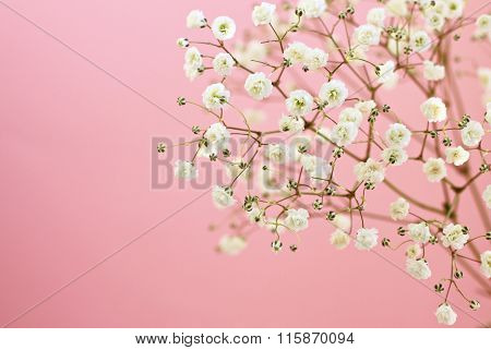 Soft flowers on pink
