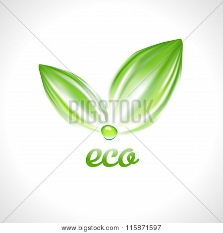 Green leaves with drop Ecology logo