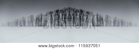 Winter Tree Symmetry Long Horizontal