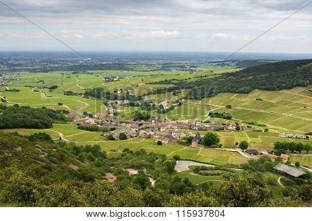 Vineyard Of Solutré Village, Bourgogne, France