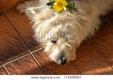 Dog With Yellow Flower