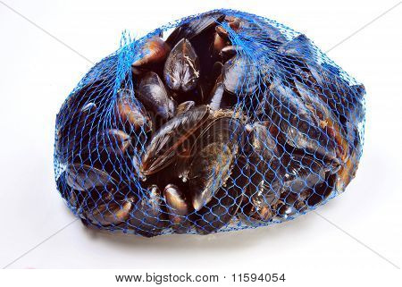 some fresh organic mussel in a blue net poster