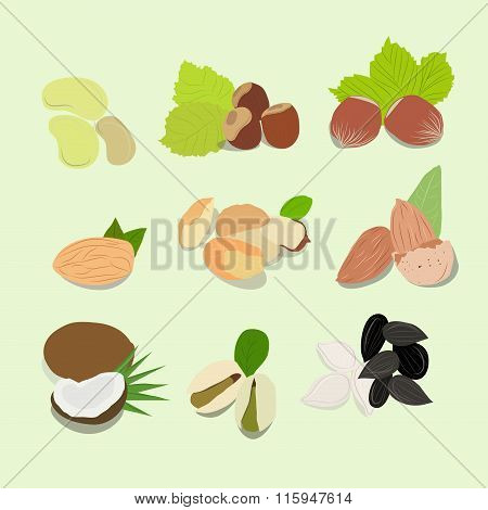 Nuts Vector Collection