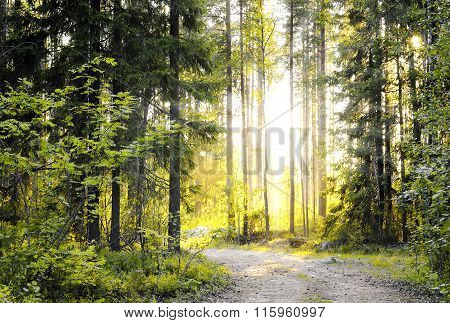 Sunny forest early in the morning