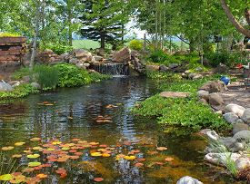 A Small Pond With Lilly Pads And Koi Fish