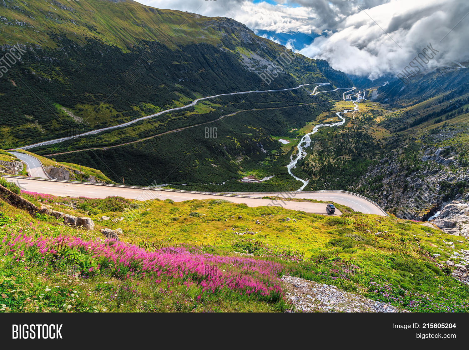 Beautiful Pink Alpine Image Photo Free Trial Bigstock