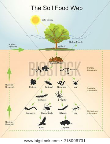 The soil food web is the community of organisms living all or part of their lives in the soil. It describes a complex living system in the soil and how it interacts with the environment plants and animals.