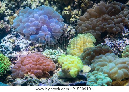 Various colorful sea anemone organisms attached to sea rocks