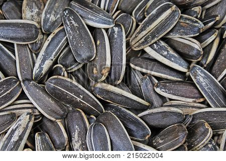 Sunflower seeds. Sunflower seed texture as background. Black and white roasted organic seeds. Food photography in studio. Texture background.