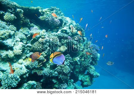 Reef with a variety of hard and soft corals and tropical fish. Red sea