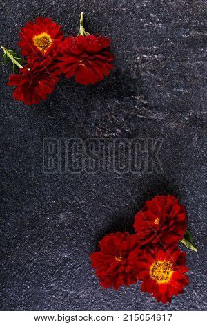 Flowers are red with a yellow center in different angles on a stone background