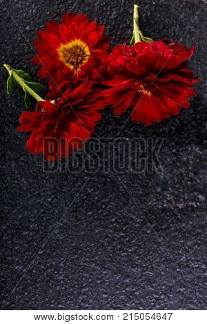 Flowers red with yellow center close-up on a stone background