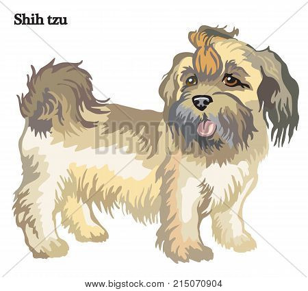 Portrait of standing in profile dog Shih tzu vector colorful illustration isolated on white background