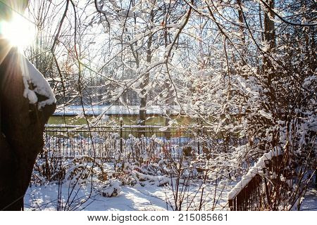 Winter background with frosty trees, fir and bushes. Forest under snow on the snowy background. Plant at frosty day.