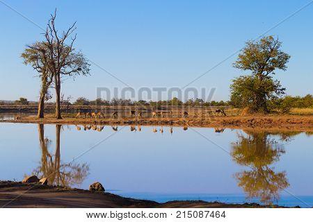 Kruger National Park, Reflections On Lake