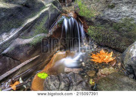 A small creek creates a waterfall into a pool near Bellingham, WA.
